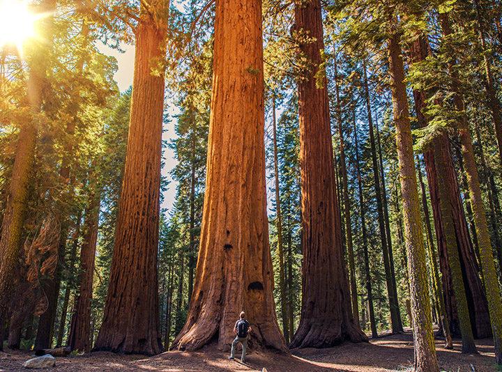 A Dream Day Trip Through the Santa Cruz Mountains