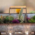Texican Cactus